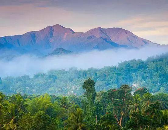 """科普一下,不是所有标""""蓝山""""都是真蓝山,牙买加蓝山和蓝山风味咖啡的区别"""