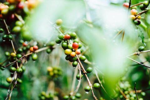 如何煮出自己想要的咖啡口感?掌握这3点,偏酸、偏苦随你泡