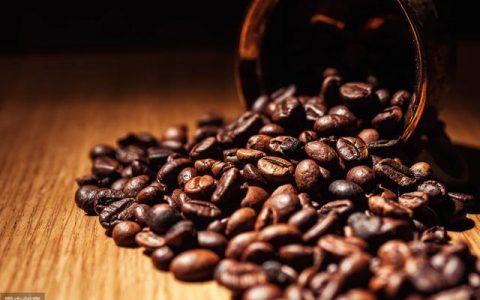 阿拉比卡咖啡豆怎么样?