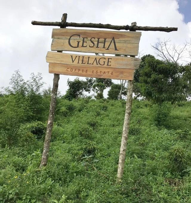 【专题报告】埃塞俄比亚·瑰夏村庄园CHAKA瑰夏日晒咖啡豆