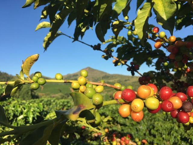 首冲耶加雪菲,以及埃塞俄比亚咖啡豆评级标准Grade背后的逻辑