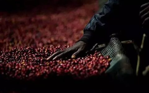 除了耶加雪菲,埃塞俄比亚的咖啡产区你还知道什么?
