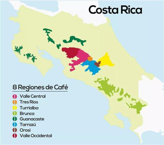 如何冲好一支瑰夏?哥斯达黎加神父瑰夏的不同器具冲煮方案