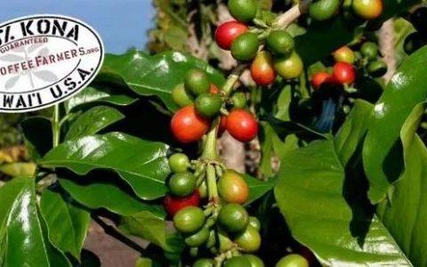 低海拔咖啡皇后诞生地:夏威夷科纳咖啡