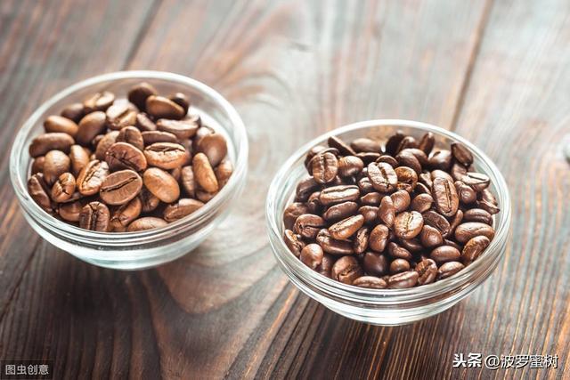 阿拉比卡和罗布斯塔,懂这两种咖啡豆,星巴克里你才是真正的牛X