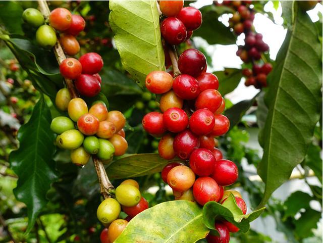 这5款咖啡豆,是2019年最值得品尝的新潮咖啡风味